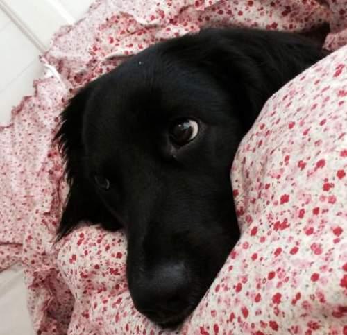 Unluckiest Pets - black dog
