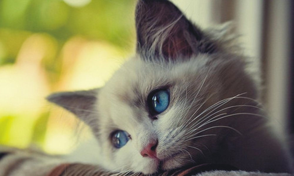 Sad cat for Blue Monday