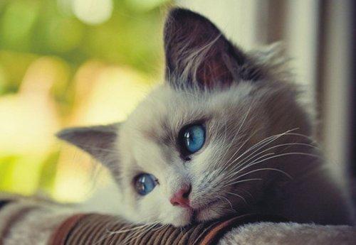 Sad cat for Blue Monday