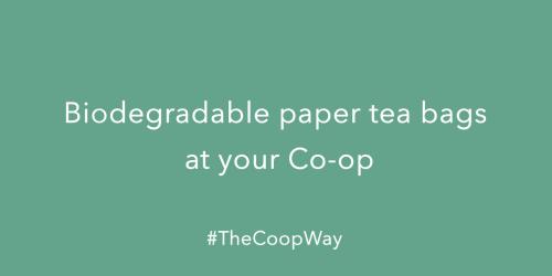 Biodegradable Paper Tea Bags