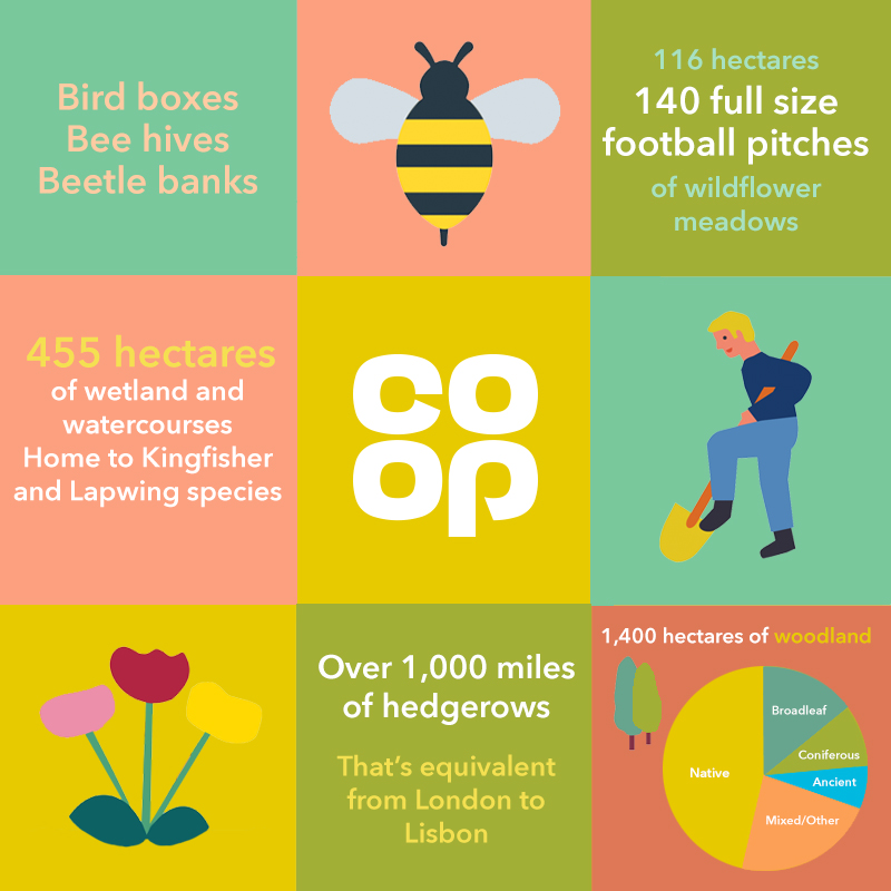 Co-op Infographic explaining the types and amounts of land we can change to encourage bees and wildlife
