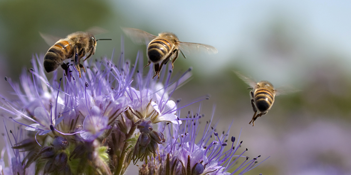 We're helping farmers boost bee numbers