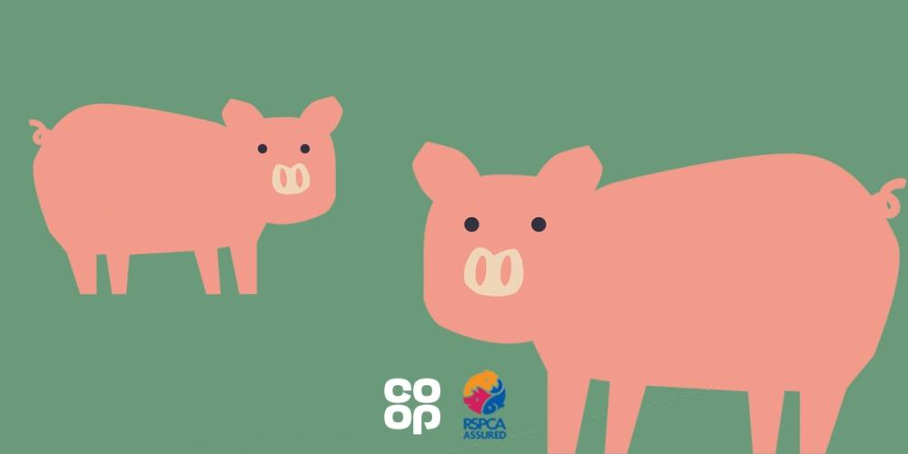 Pork is outdoor bred