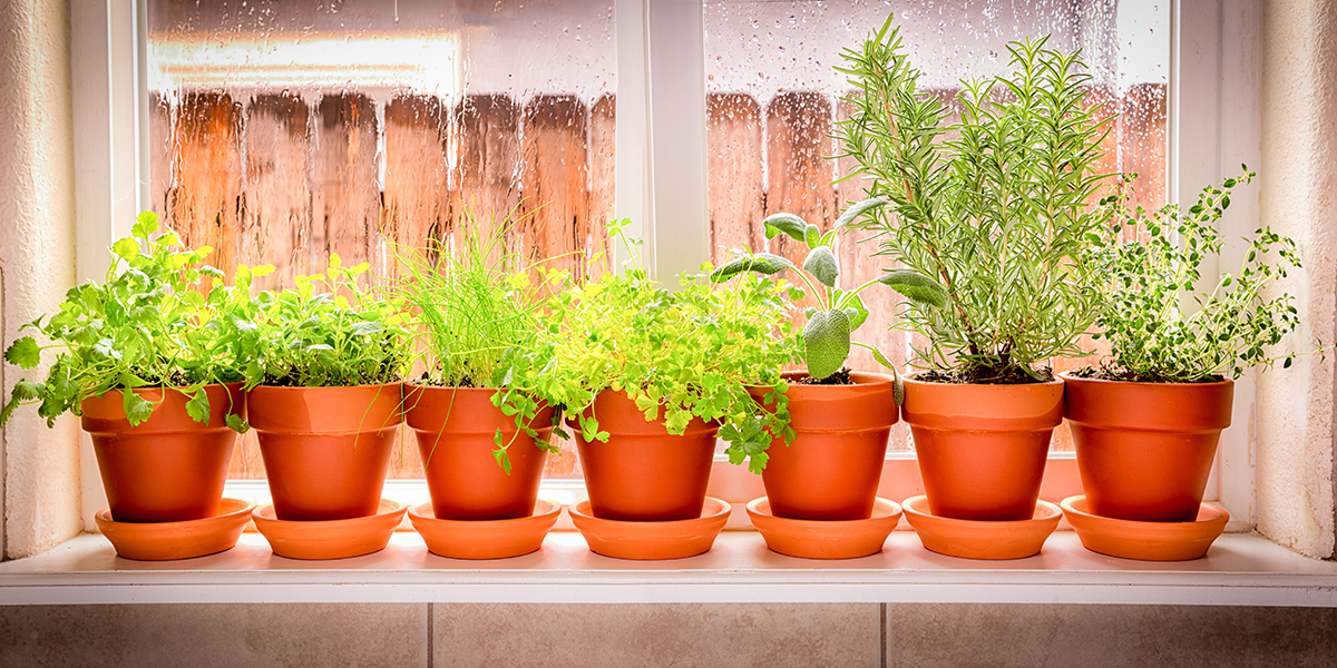 5 easy foods you can grow sustainably at home (whether you have a garden or not!)